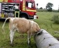 Witzige Feuerwehr Bilder